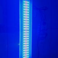 lampu aquarium tanning arwana 20 ribu kelvin
