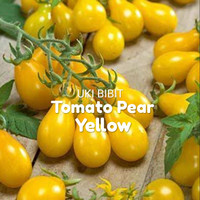 ( 6 Butir ) Benih Tomat Pear Kuning | Tomat Cherry Kuning