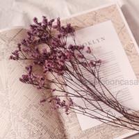 Dried Flower Bunga Kering Asli Dekorasi Rustic Preserved Lilac Purple