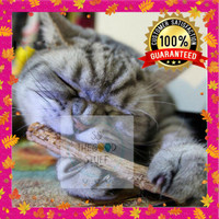 Catnip Stick Snack Kucing Kayu Aroma Therapy Cat Toys