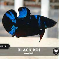 Jual Ikan Cupang Avatar Di Banten Harga Terbaru 2020