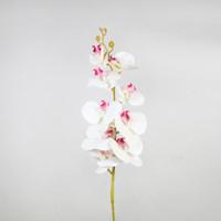 Bunga Anggrek Palsu / Orchidaceae Artificial / Properti Foto Produk