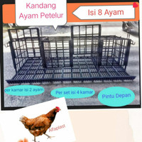 Kandang Ayam Petelur isi 8 ayam