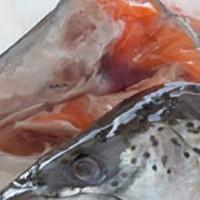 kepala salmon 1 kg harga 55.000