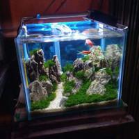 Aquarium/AquaScape full set decorasi,lampu,mesin filter,dan ikan hias