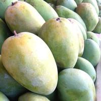buah mangga harum manis/manis daging tebal