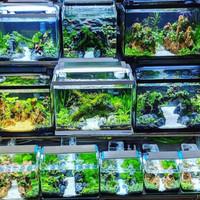 Aquarium/AquaScape full set decorasi,lampu LED,mesin filter&ikan hias