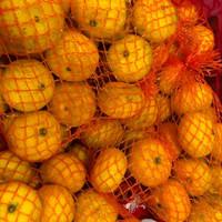 buah jeruk santang segar