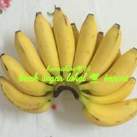 pisang raja sereh 1 sisir