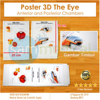 Poster 3D The Eye Anterior and Posterior Chambers / Poster Mata