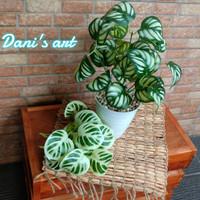 set tanaman pikok / bunga plastik/ tanaman palsu/ pikok palsu