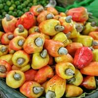 buah jambu monyet mede fresh