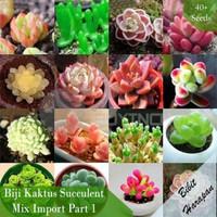 Benih Bibit Biji Kaktus Succulent Sukulen Mix Import Part 1 isi 40 - Part 1