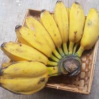 SayurHD pisang kepok 1 sisir