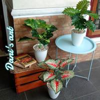 Set aglonema palsu/ keladi palsu/ keladi plastik/ tanaman plastik