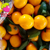 BUAH JERUK SANTANG DAUN/Buah Import/Harga per-keranjang 7 kg