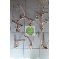 Kayu Tangkringan iguana kayu kopi tempel kandang lovebird