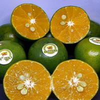 Buah jeruk peras pontianak sangat cocok untuk menyegarkan tubuh.