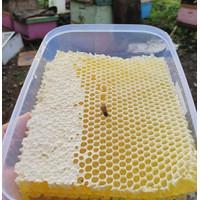 Madu Sarang Asli 500 grm Honeycomb Malifera Premium Asli