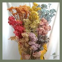 Dried Rice Flower Buket Bunga Kering asli Pajangan Dekorasi
