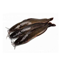 SayurHD ikan segar lele 500gr
