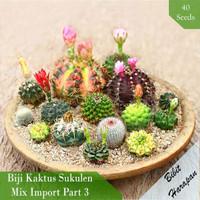 Benih Bibit Biji Kaktus Succulent Sukulen Mix Import Part 3 isi 40