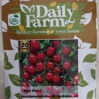 Daily Farm - Benih Bibit Tomat Cherry Red Rubby - Manis Segar