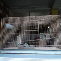 Kandang Burung Besar Besi