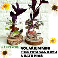 Aquarium Mini Ikan Cupang Unik Aquarium Kaca FREE Tatakan Kayu n Batu