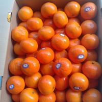 buah jeruk ponkan taiwan manis ponkam lukam lukam honey mandarin