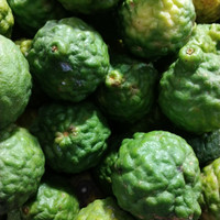 khas Medan buah jeruk purut jantan (berat 100gram)