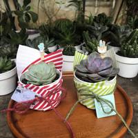 Hamper lebaran kaktus hias sukulen mini parcel idul fitri