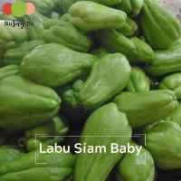 Sayur Labu Siam Siyam baby muda kecil (Chayote) 500 gr • BUSAYDA