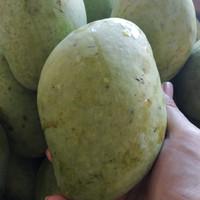 buah mangga indramayu mengkel 1 kg isi 3