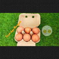Paper egg / tray egg kertas 6 lubang sudah ada pengunci