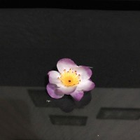 Sovenir Tempelan Kulkas Bunga Sakura, Bunga Artificial 4cm