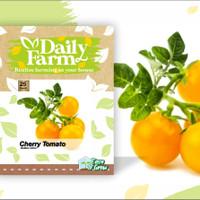 Daily Farm Benih Tomat Cherry GOLDEN SHINE Tomat Kuning Repack Import