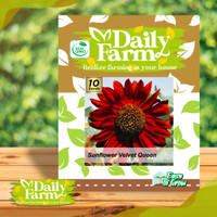 Daily Farm - Benih Bibit Bunga Matahari - Sunflower Velvet Queen