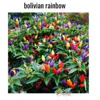 BENIH BIJI CABE BOLIVIAN RAINBOW 12 BIJI KEMASAN ORY CABE HIAS PELANGI