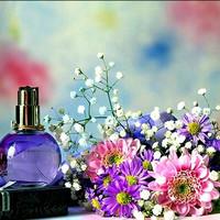 Fragrance Akasia / Bibit Akasia (100ml)
