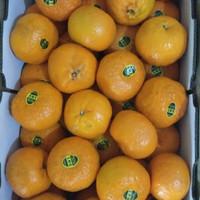 jeruk wokam 1 krat +- 9 kg