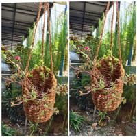pot anggrek sabut kelapa gantung