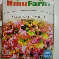 benih selada curly red Ninufarm