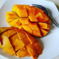 bibit tanaman buah mangga arumanis / mangga gadung