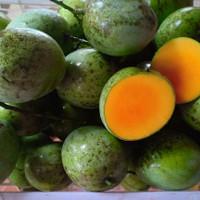 bibit tanaman buah mangga apel unik