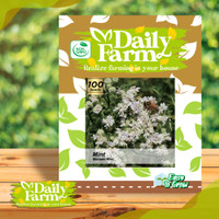 Daily Farm - Benih Bibit MINT Mountain Mint - Bibit Daun Mint Seed