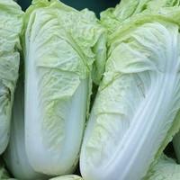 sayur sawi putih fresh