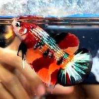Jual Nemo Cooper Murah Harga Terbaru 2020
