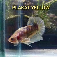 plakat yellow fancy