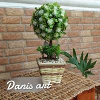 Bonsai pohon bulet/ topiary/ Bonsai palsu